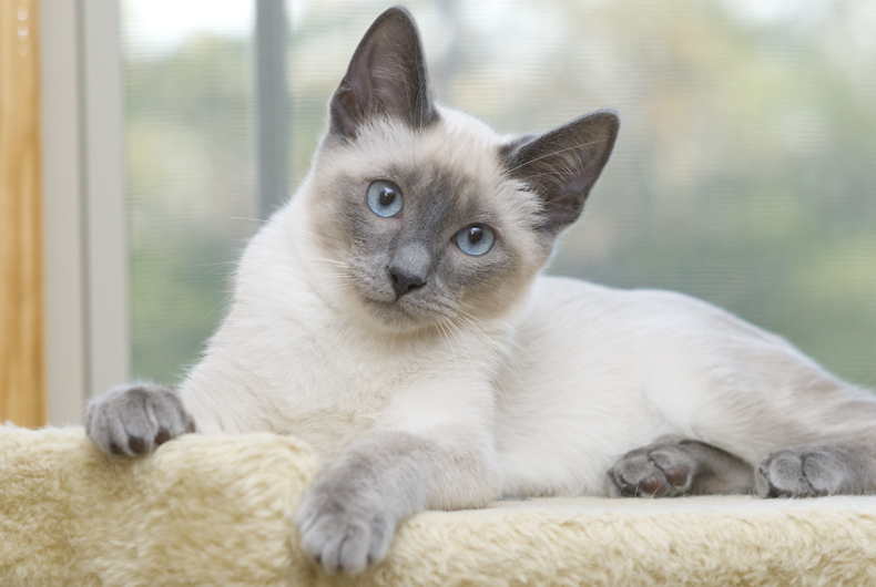 Blue Eyes Cattery